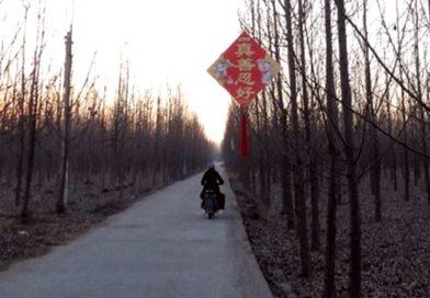 плакаты о Фалуньгун